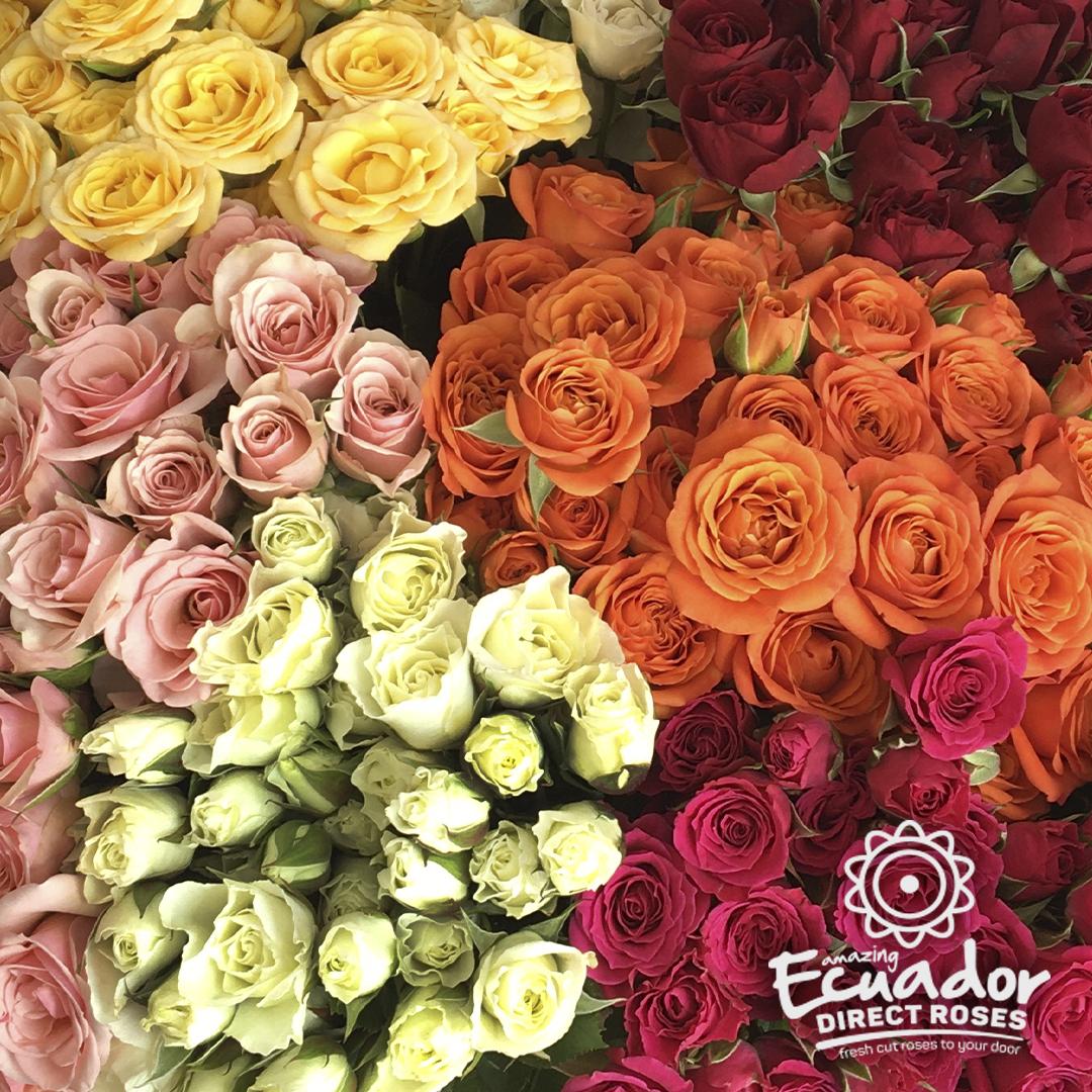 Spray-roses-mix