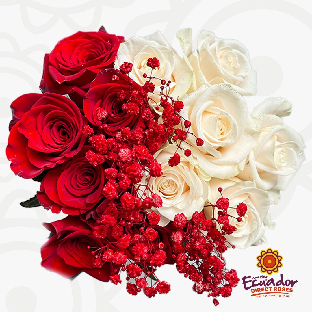dozen-roses-red-gypso